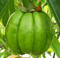 Garcinia Cambogia Pills For Weight Loss Reviews